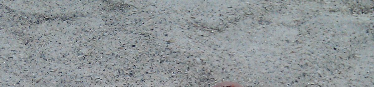sandbetweenmytoesdotme